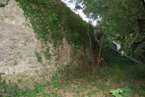 Mur d'enceinte recouvert par le lierre et les arbres
